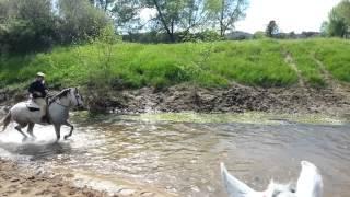 Download Con los caballos en el agua Video