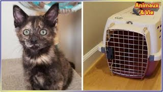 Download Un couple adopte un chaton, mais de retour à la maison ils ont une énorme surprise Video
