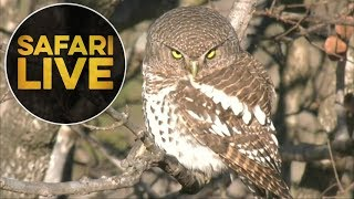 Download safariLIVE- Sunrise Safari - July 18, 2018 Video