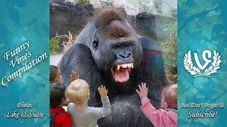 Download Animals Scaring Kids At Zoo | Animals Love To Scare Cute Kids Video