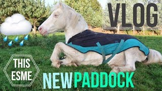 Download Vlog | New Winter Paddock, Worming and Jumping | This Esme Video