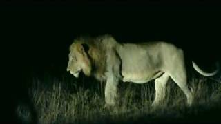 Download Lion meeting Video