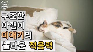 Download 구조한 아기고양이의 놀라운 적응력 / JAPAULBO&FRIENDS Video