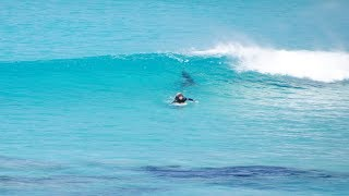 Download Close encounter with Great White Shark : Surfer approached by shark at crowded West Beach Video