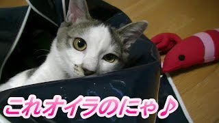 Download カバンの中が好き過ぎる猫 Video