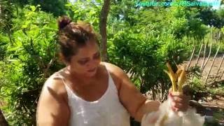 Download Gladis La Sirenita: Como degollar y desplumar una gallina o pollo para comer Parte 1 Video