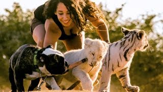 Download Lion, Tiger & Bulldog Buddies: Cute Animal Babies Video