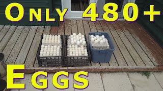 Download Only 40+ Dozen Egg Food Bank Donation #FixYouTubeAppeals May 15, 2018 Video