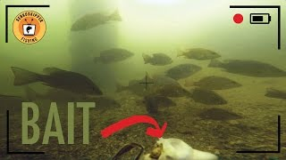 Download How many fish actually see your bait? Video