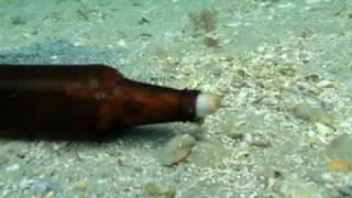 Download The Octopus and the Beer Bottle Video