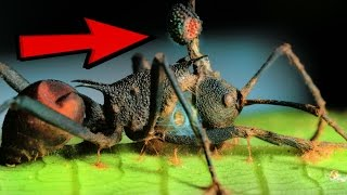 Download 10 Zombie Organisms In Nature Video