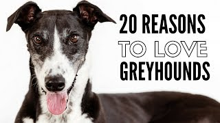 Download 20 Things I Love About My Greyhounds Video