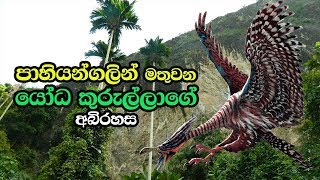 Download පාහියන්ගලින් මතුවන යෝධ කුරුල්ලාගේ අබිරහස - Pahiyangala Cave In Bulathsinhala Video
