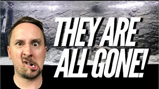 Download FISH ARE ALL GONE......but this! | Jay Wilson Video