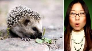 Download PET ANIMALS vocabulary in Korean (KWOW#29) Video