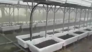 Download Thi công lắp đặt nhà kính trồng rau sạch tại Hưng Yên Video