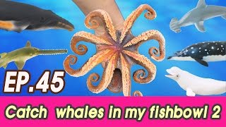 Download [EN] #45 Let's catch whales in my fishbowl 2 kids education, Collecta figure [CoCosToy] Video