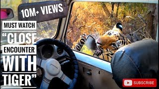 Download Must watch ″close encounter with tiger T6 cubs″, karhandla 1-1-16 Video