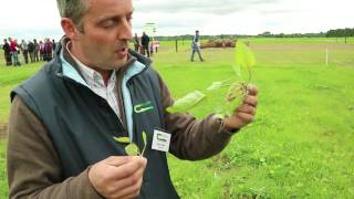 Download Beef 2016: Gary Fisher on reseeding Video