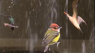 Download COLOMBIA BIRDFAIR 2016, ESTAS SON LAS NOVEDADES Video
