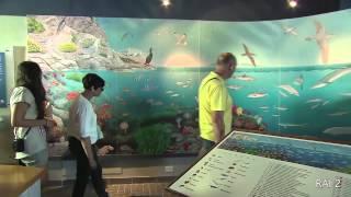 Download SERENO VARIABILE - ISOLA D'ELBA 2014 Video