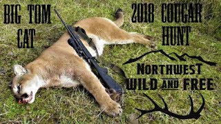 Download FoxPro Inferno Calls in Cougar - Tracking and Killing a Mountain Lion in the Northwest Video