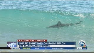 Download Sharks spotted migrating along Palm Beach coast Video