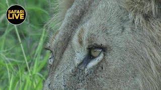 Download safariLIVE - Sunset Safari - January 16, 2019 Video
