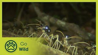 Download Termites - The Inner Sanctum - The Secrets of Nature Video