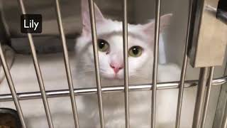Download GOING TO THE ANIMAL SHELTER TO ADOPT A CAT Video
