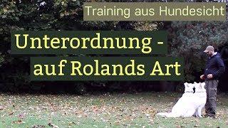 Download Hundetraining Unterordnung - Training mit zwei Hunden Video