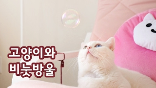 Download 고양이와 비눗방울 Cats and Bubble Video