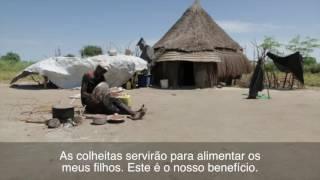 Download Sudão do Sul: sementes germinam esperança de melhor sustento em Watt Video