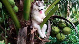 Download 배꼽빠질 웃긴 강아지 영상 모음 🐶 세계에서 가장웃긴 강아지 영상ㅋㅋㅋㅋㅋㅋㅋ Video