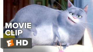 Download The Secret Life of Pets Movie CLIP - New Dog (2016) - Louis C.K., Lake Bell Movie HD Video