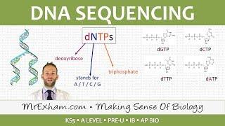 Download DNA sequencing - Post 16 Biology (A Level, Pre-U, IB, AP Bio) Video