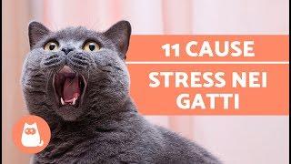 Download 11 COSE che fanno STRESSARE il gatto – Accudire un gatto Video