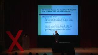 Download Memory Manipulation: Karim Nader at TEDxUChicago 2012 Video