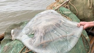 Download GIANT JELLYFISH Catch and Cook - Vietnam Street Food - Vietnam Seafood Video