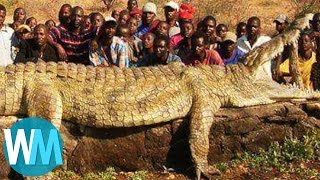 Download Top 10 Most Insanely COLOSSAL Animals of All Time Video