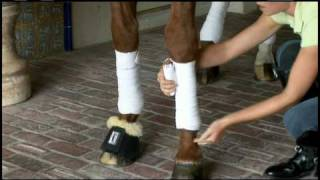 Download Protecting a Dressage Horse's Legs Video