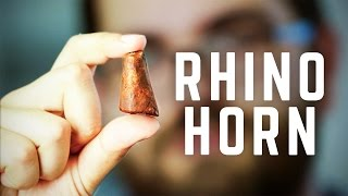 Download 3D Printing Rhino Horns Can Stop Poaching in Africa Video