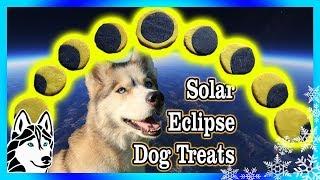 Download DIY SOLAR ECLIPSE DOG COOKIES | DIY Dog Treats | Snow Dogs Snacks 79 Video