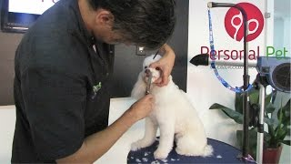 Download CURSO DE BANHO E TOSA - Dica topete do Poodle Video