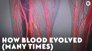 Download How Blood Evolved (Many Times) Video