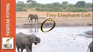 Download Did the herd reject this baby elephant? Video