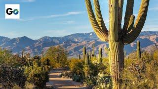 Download Saguaro National Park Video