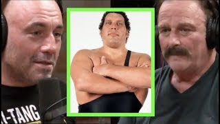 Download Joe Rogan - Jake The Snake on Andre the Giant Video