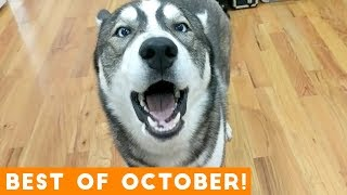 Download Ultimate Animal Reactions & Bloopers of October 2018 | Funny Pet Videos Video