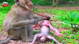 Download MOG New baby monkey cry and cry why kidnapper do like this very pity baby Youlike monkey Video